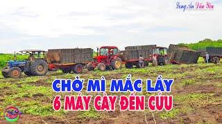 Gambar cover Máy Cày Belarus MTZ 800 Chở 10 Tấn Khoa Mì Mắc Sụp Hầm Mắc Lầy | MTZ TractorLADY899