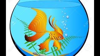 Золотая рыбка в аквариуме...