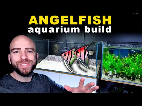 4ft ANGELFISH JUNGLE AQUARIUM BUILD BEGINS || MD FISH TANKS