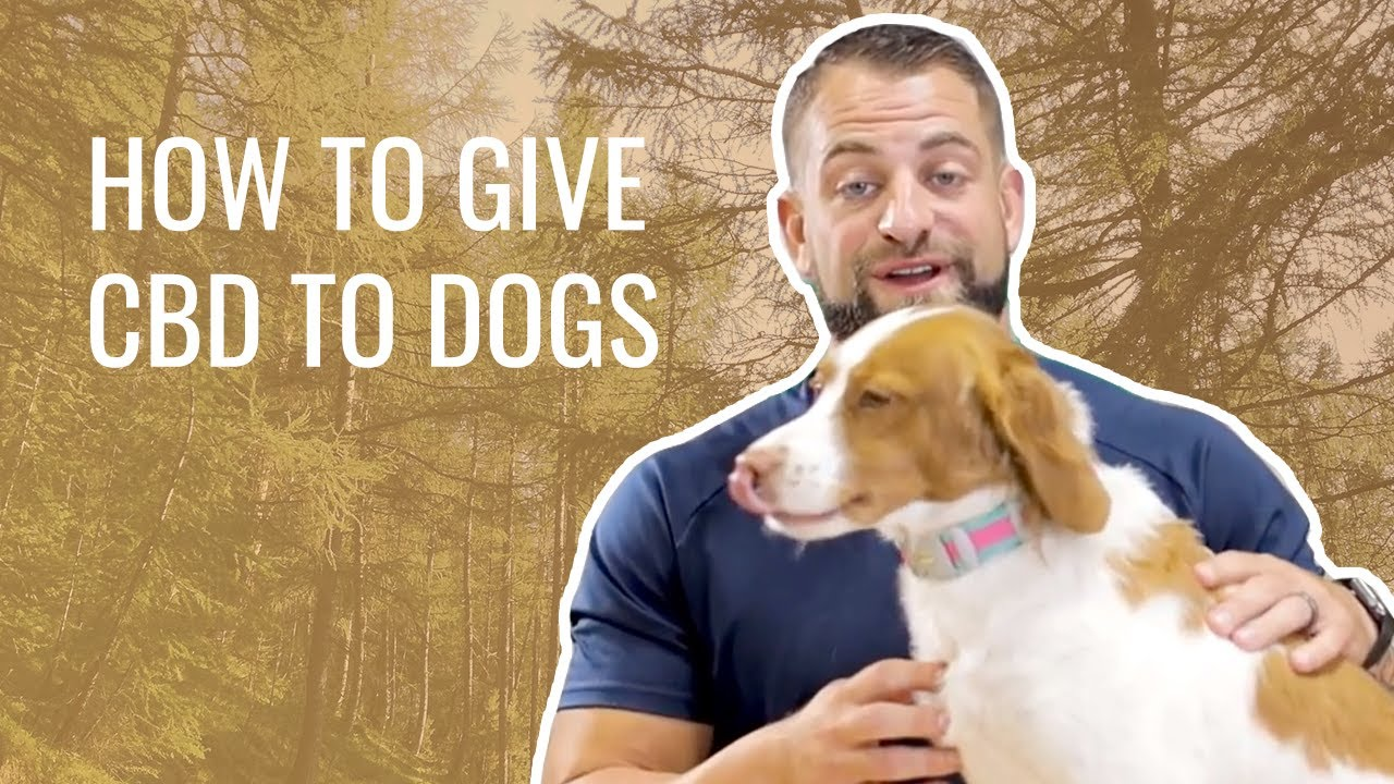 HOW TO  GIVE CBD TO DOGS (3 ways)