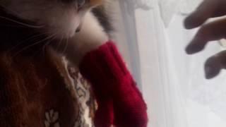 Моей кошке холодно