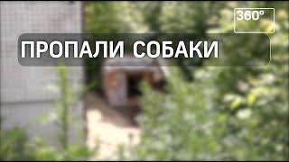 В Москве украли собак из-за обращения сотрудников супермаркета