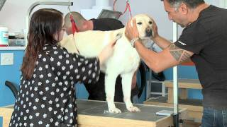 Whitby Shop Talk: Pawsitively Clean Dogs