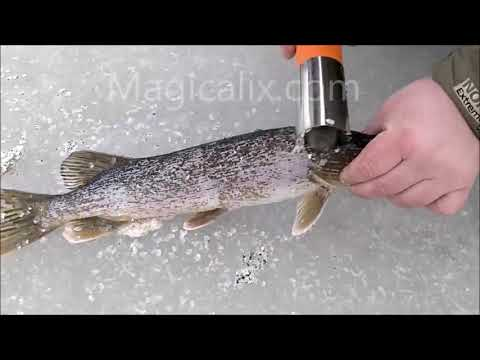 Electric Fish Scaler By Magicalix