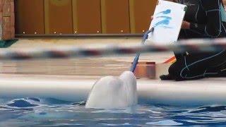 Дельфинарий в Адлере. Пение дельфинов и рисунок кита