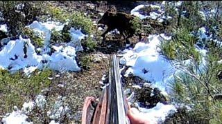 Karda heyecan dolu yaban domuzu avı / Wild Boar hunting in Turkey