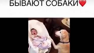 Какими верными бывают собаки