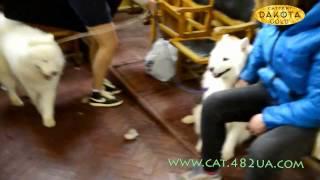 Выставка собак, Харьков, 30 октября 2016, видео 11