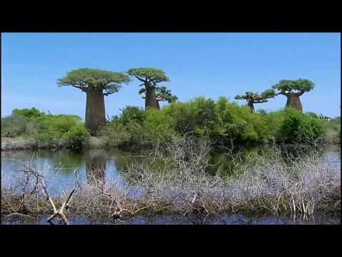 The Baobab Trees (Madagascar)