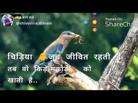 Ego Motivation Quotes Status Shayari