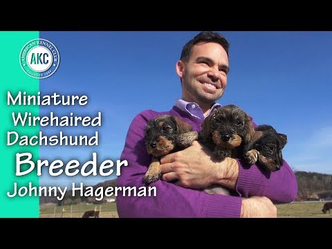 I Am A Breeder - Johnny Hagerman - Miniature Wirehaired Dachshund