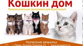 Международная выставка кошек 2013