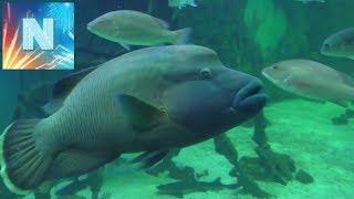 ТОП самых необычных животных  АКВАНАРИУМ морские животные удивительное факты