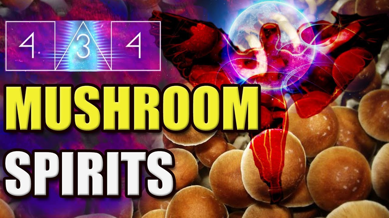 Magic Mushroom Messages - Interview with 434