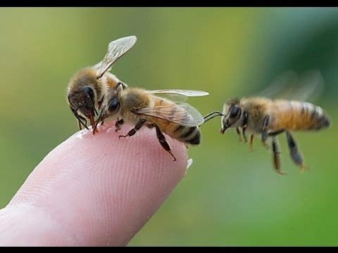 The Crazy World of Honey Bees - Documentary Films