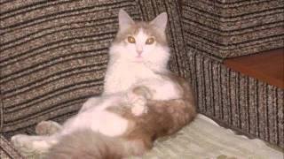 Рыжий кот   рецепт от всех невзгод