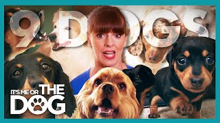 Six Owners and Nine Dogs All in a Single Home! | It's Me or The Dog