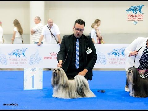 WDS Moscow 2016 Lhasa Apso