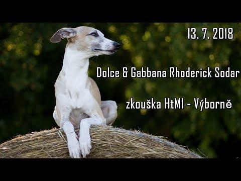 Dolce - zkouška Dog dancing - HtM1 Výborně
