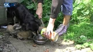Koszmar: Głodzone, zdane na siebie psy. Szokujący film