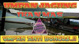Download Video UMPAN JAGUNG Si Mbah # TES UMPAN NETER# MP3 3GP MP4