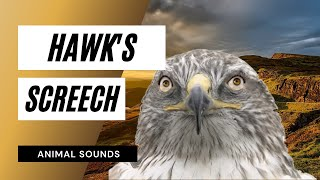The Animal Sounds: Hawk Screech - Sound Effect - Animation