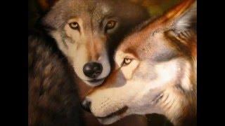 Лариса Черникова Одинокий Волк