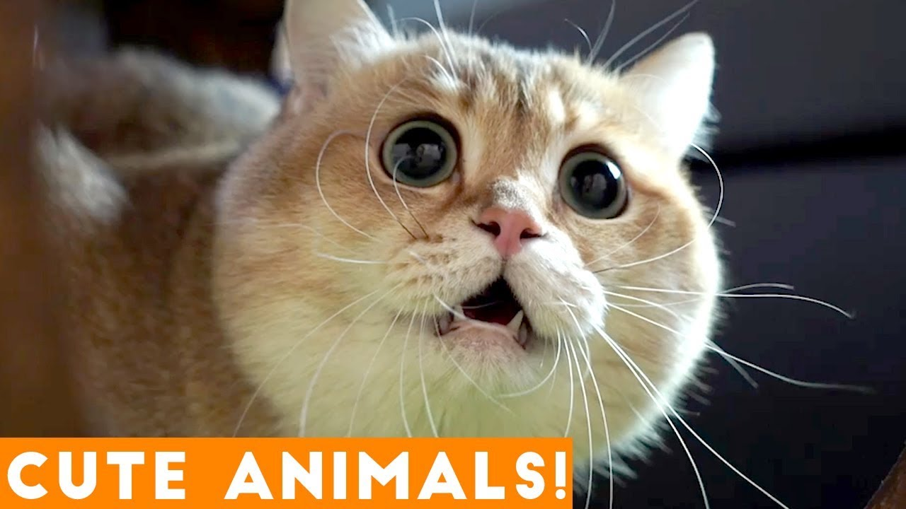 Animals Funny Wallpapers Cute Funny Wallpapers: Ultimate Cute Animal Compilation January 2018