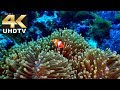 TCL 4K Demo Video - Explore the Wonders of Life in Dolby Digital