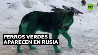 Perros verdes pasean por las calles de una ciudad rusa