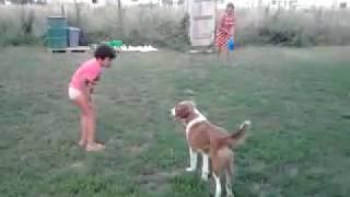 Девочки убегают от собаки