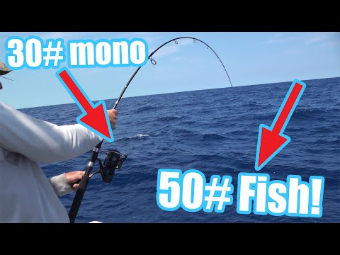 What It Looks Like To FIGHT A BIG 50# FISH On 30# Mono