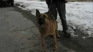 How To Eliminate Dog Agression Using Dogtraining Hand Commands