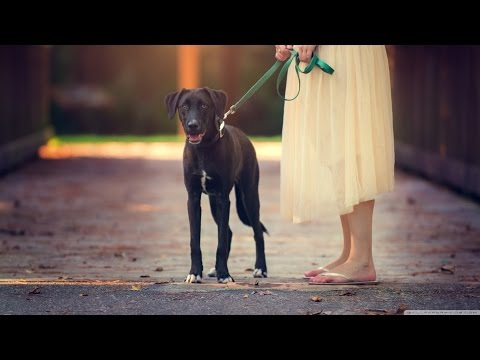 Music for Pets while you are gone - This wonderful music is for your Pets and for you - Vol.7