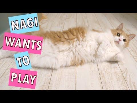 When Nagi meows