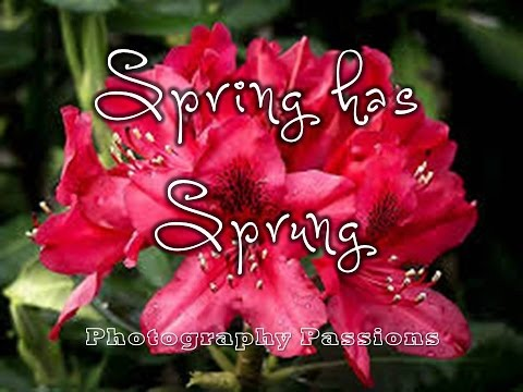 SPRING HAS SPRUNG 2: Relaxing Tui Bird Song & Rhododendrons,1 Minute