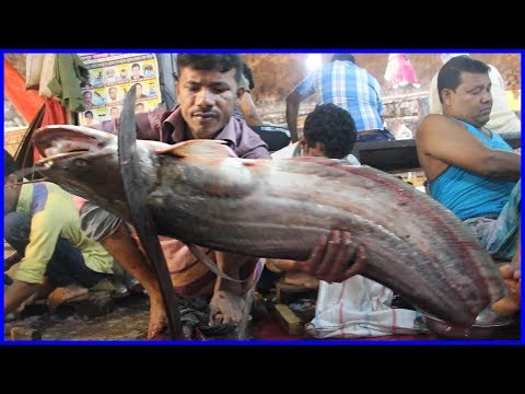 Big Wallago Catfish Slice Into Small Pieces In Fish Market By Young Fishmonger | Fish Cutting Videos