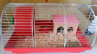 Минимальные размеры клетки для джунгарского хомяка | Какую выбрать клетку для хомяка?