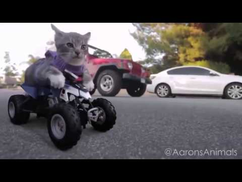 funny video cats and dogs compilation