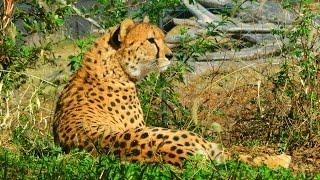 今年最初の動画は、去年初めて行った、「よこはま動物園ズーラシア」で...