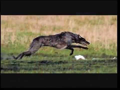 10 best hunting dog breeds