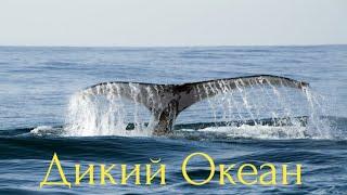 Дикий Океан