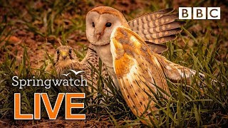 Cute wildlife cams 12 June  | BBC Springwatch