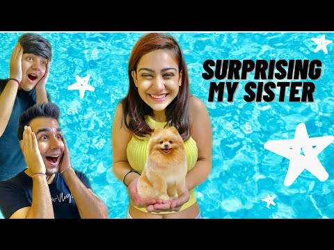 SURPRISING MY SISTER WITH A NEW DOG | Rimorav Vlogs