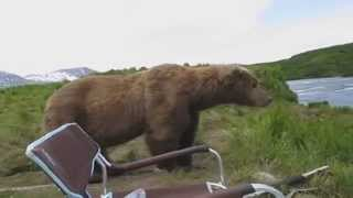Urso do lado do fotografo