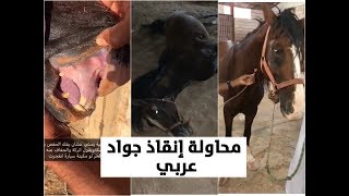 محاولة انقاذ جواد عربي من الموت !! مقطع ثري بالمعلومات