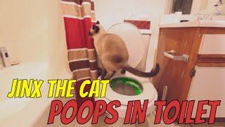 Cat poops in Toilet!  Large poo!  Jinx the Cat