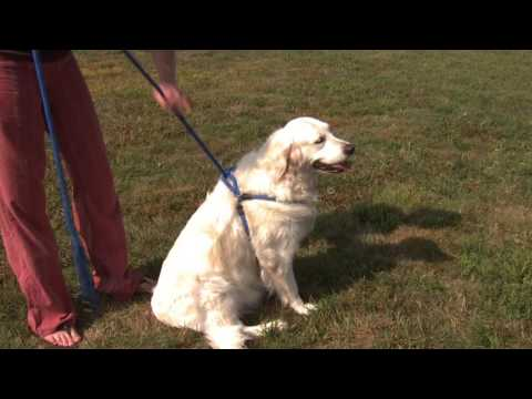 Dog Harness & Lead in One