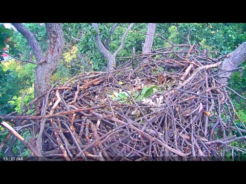 EAGLE CAM 2017 - Earth Conservation Corps, MPDC -