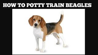 How To House Train Beagles